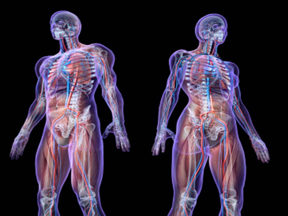 anatomiauomodonna