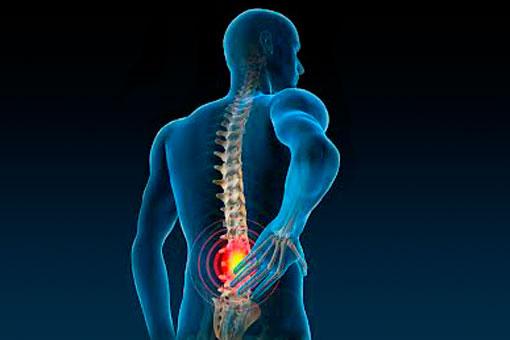 colonna_vertebrale_