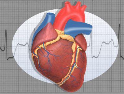cuore_anatomia