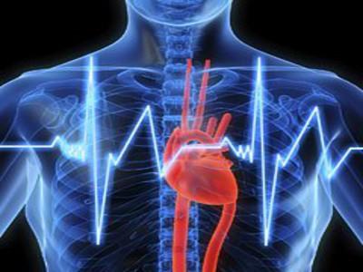 cuore_cardiologia