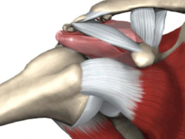 patologie-anatomia-spalla