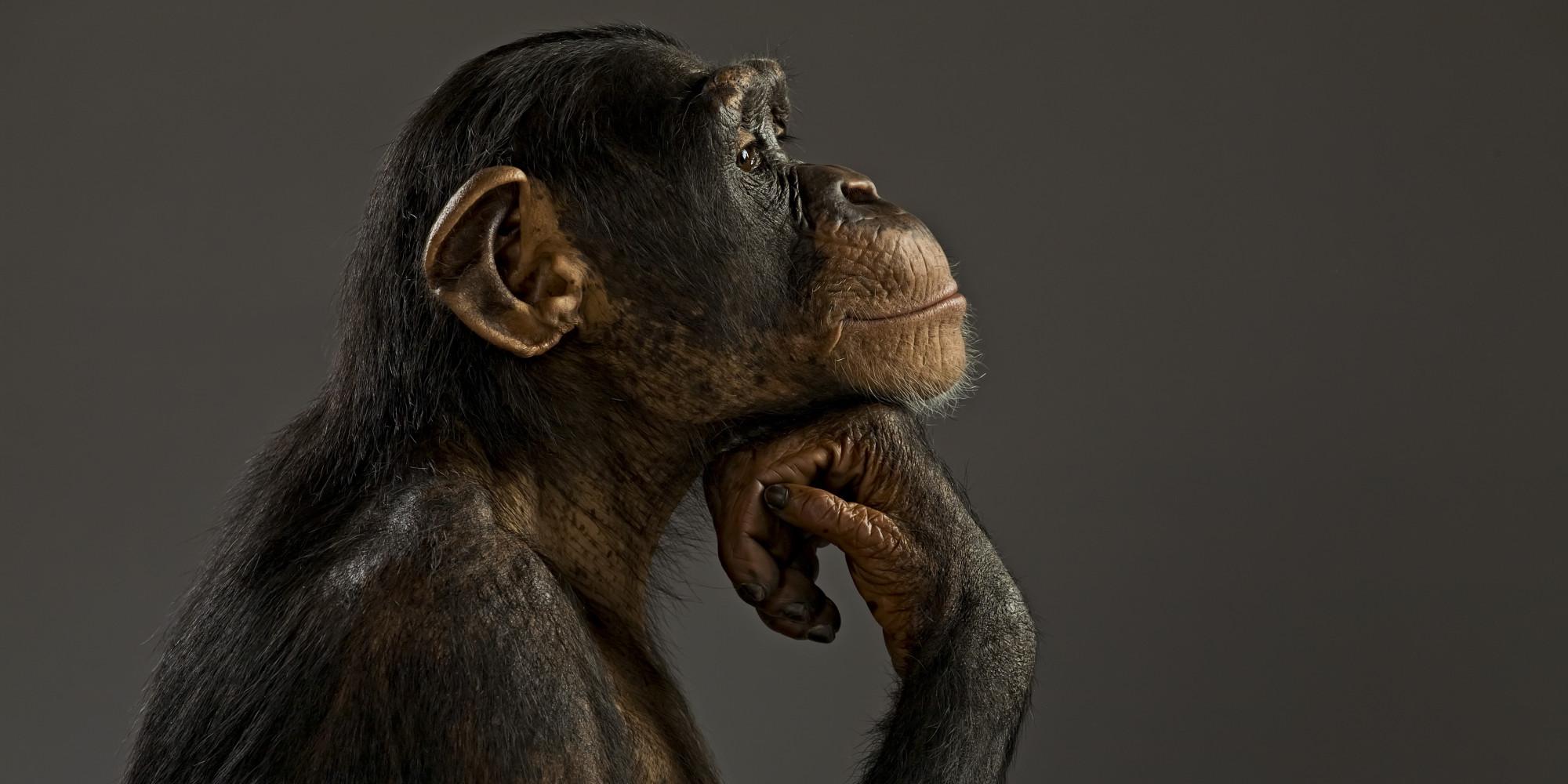Scimpanzè-in-riflessione