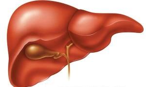 fegato-1