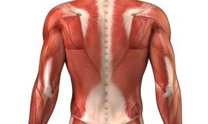 fascia-muscolare